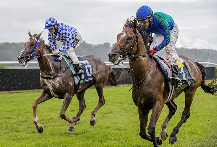 Athlete Del Sol wins Wathba Stud Farm Cup in Copenhagen