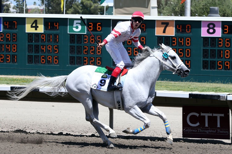 Sammy V sets another record under Italian jockey in Sacramento