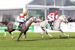 Second leg of Sheikh Zayed Cup European Triple Crown in Duindigt on June 28